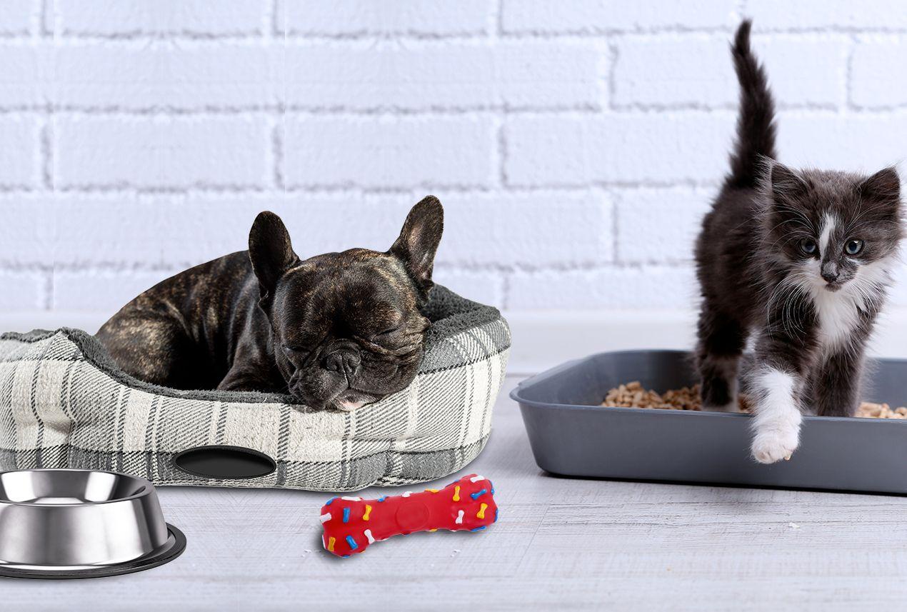 d sinfecter la maison lorsque l 39 on a des animaux sanytol. Black Bedroom Furniture Sets. Home Design Ideas